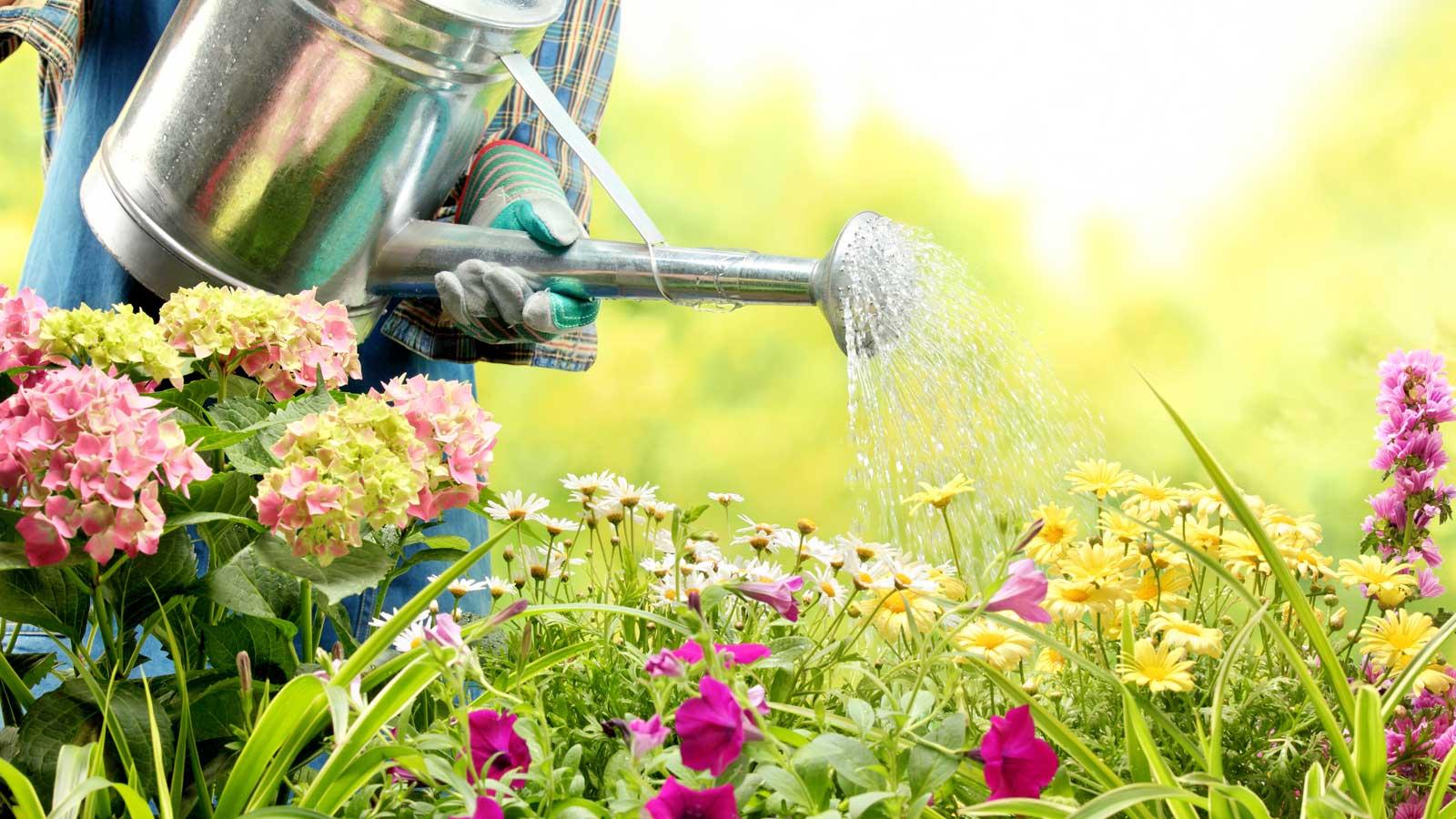 May Dreams Gardens
