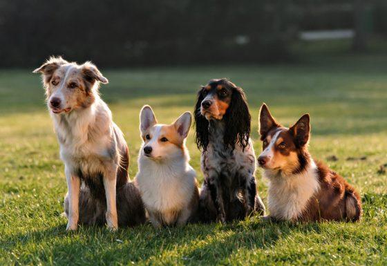 DOG ACADEMY hondentraining